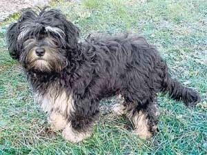 Hund-Paloma