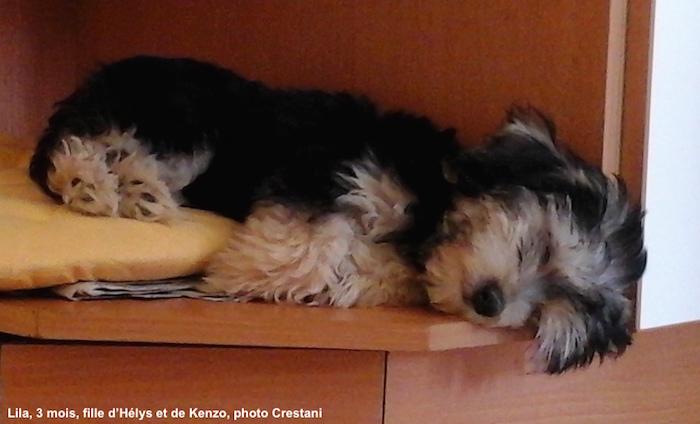 Lila a trouvé un super petit coin pour savourer ses siestes!