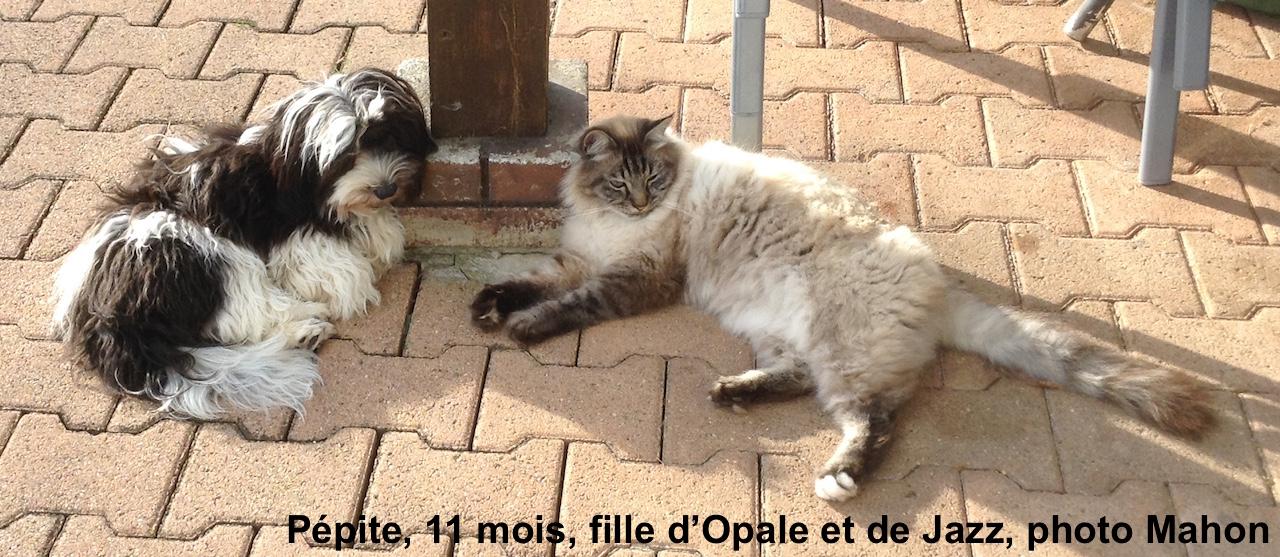 Jolie cohabitation!