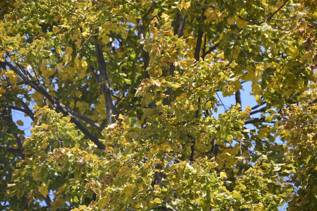 couleur automne