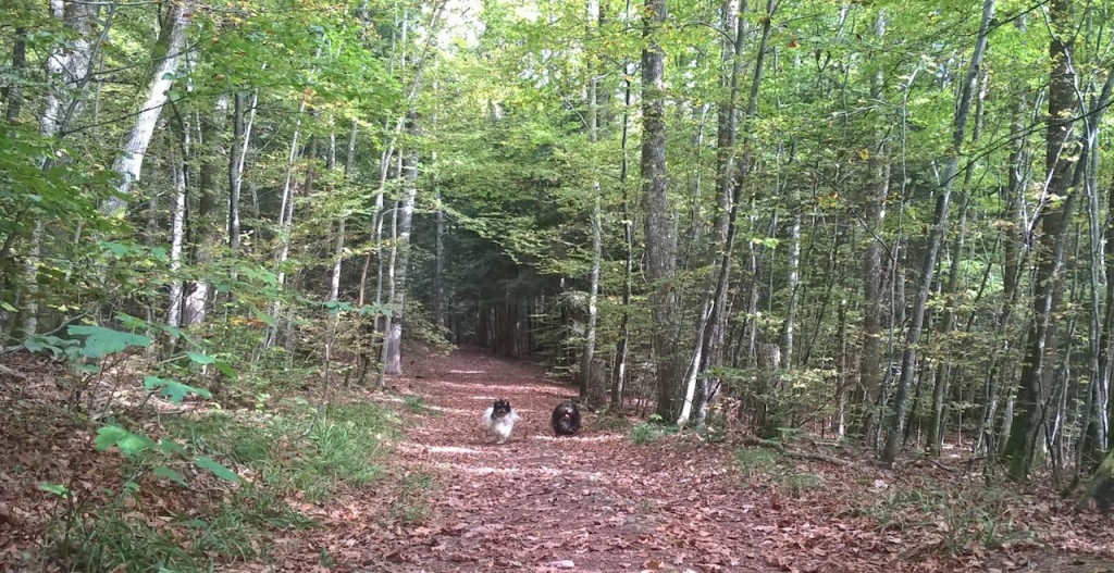 course-bichons-foret