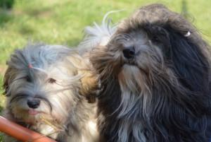 soleil brillé chiens