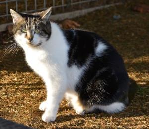 soleil brillé chat