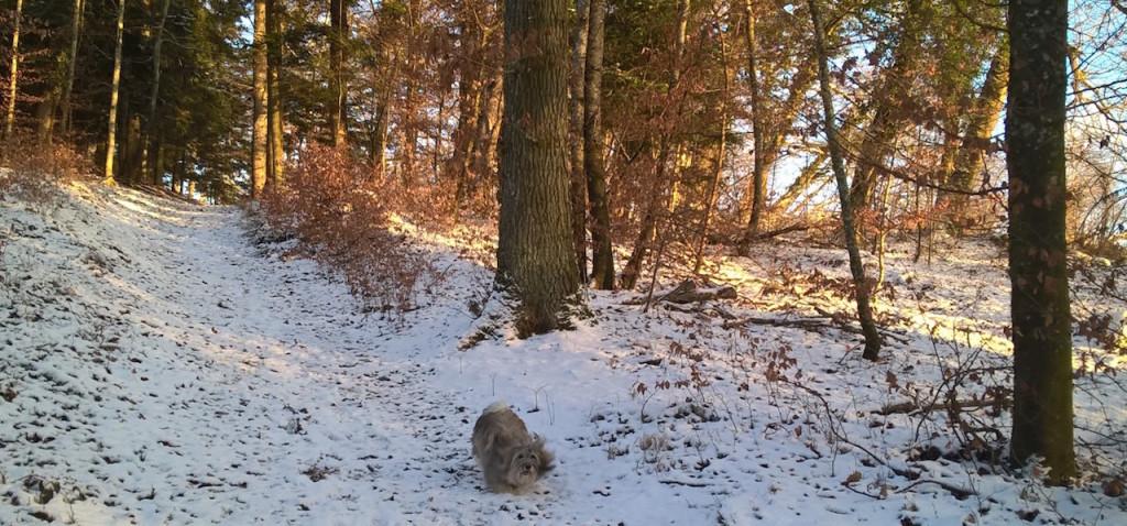 eole en balade hivernale