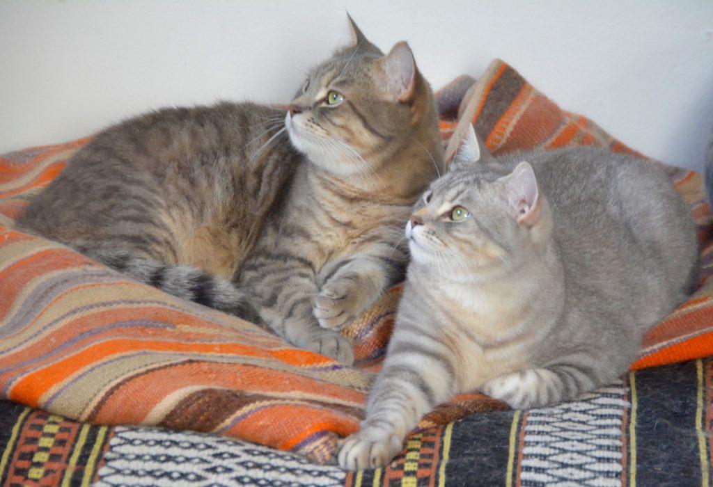 les chats à la vie est belle