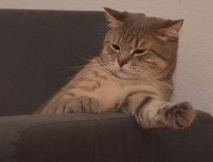 chat chez bichon