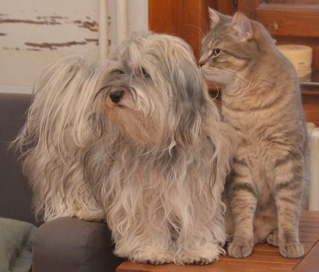 chienne et chat