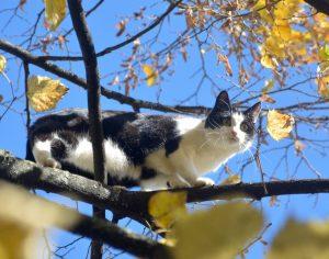 pêle-mêle photos chat à la vie est belle