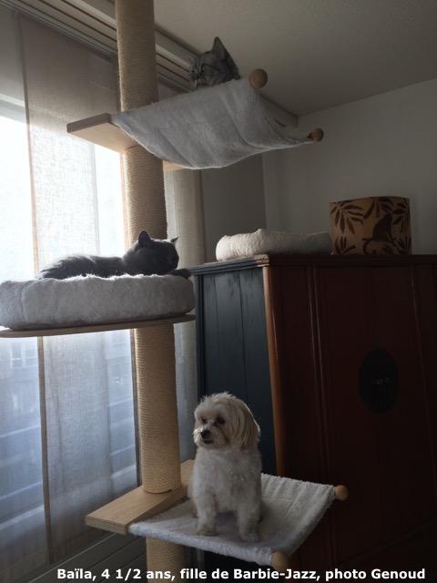 Athena et Eole, Chanel et Darius, Baïla et les chats
