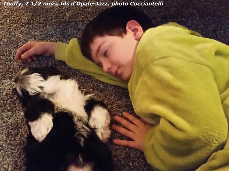 Snoopy et Touffy nés à l'élevage de bichon havanais à la vie et belle