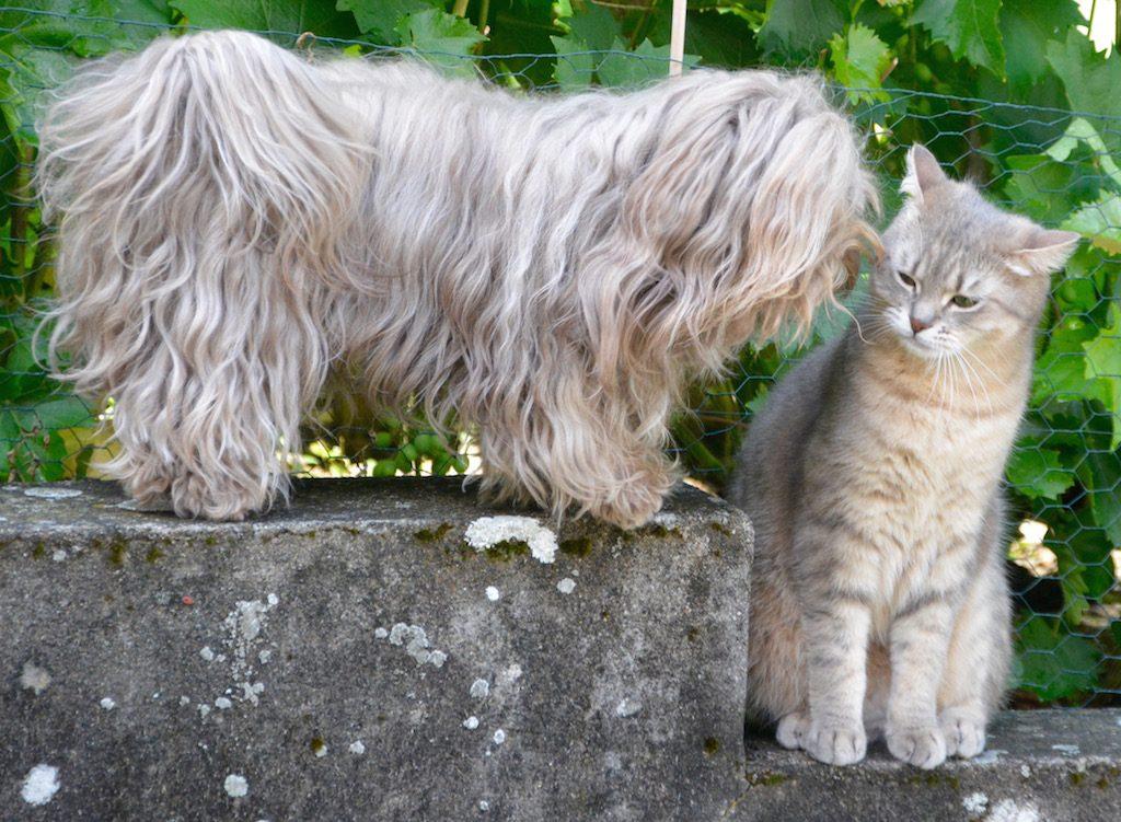 Chiots et chatons, chiens et chats