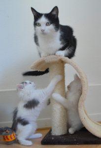 Et Kea et ses chatons