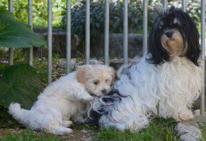 Melody et ses arrière-petits-enfants