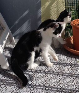 Des petits bichons ont accueilli nos chatons