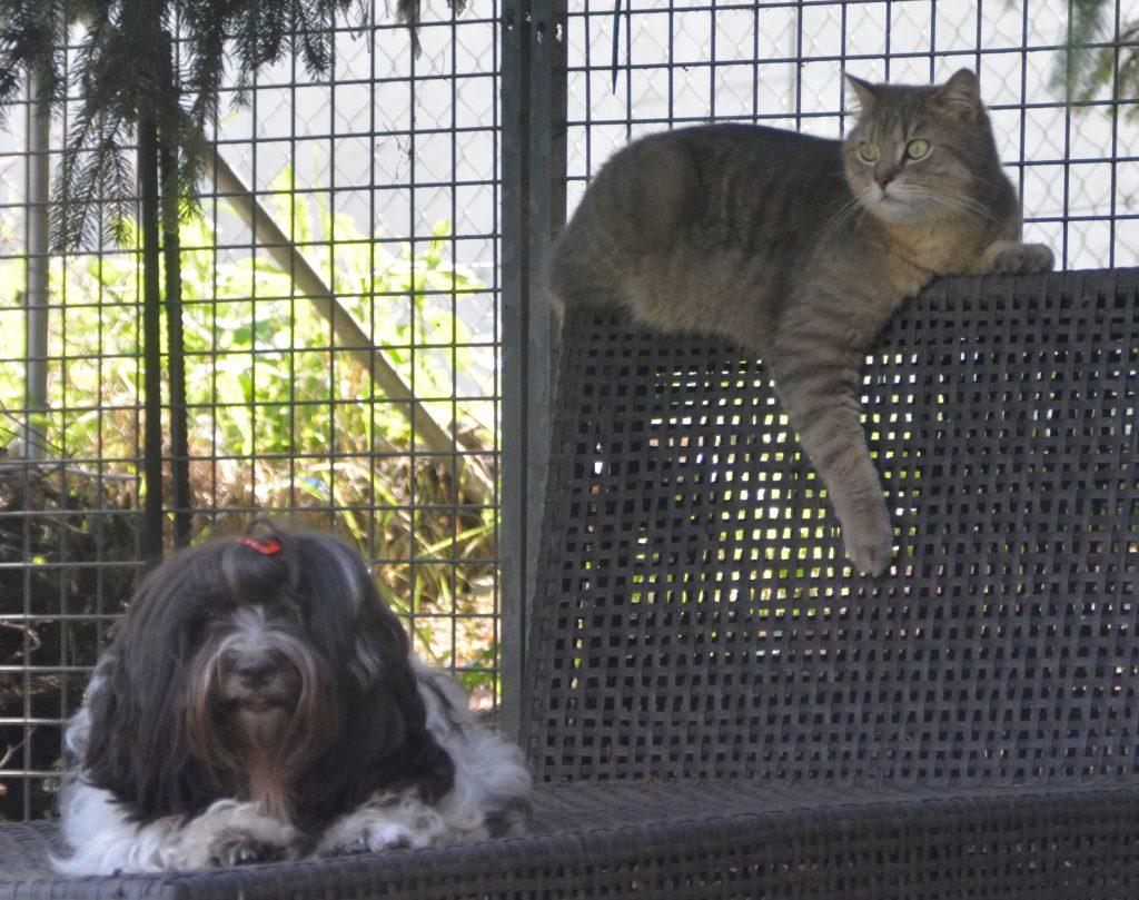 Bichon havanais et chat à la vie est belle de Neuchâtel