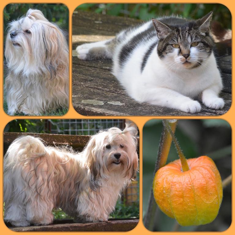 La vie en élevage avec chiens et chat