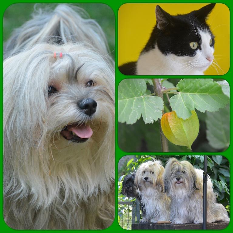 La vie en élevage avec chiens et chats