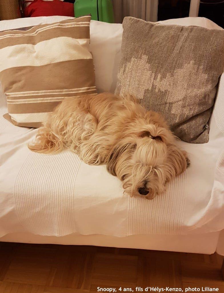 Snoopy a retrouvé son sofa