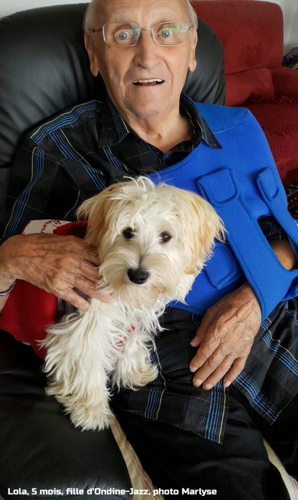 Lola née à l'élevage de bichons havanais à la vie est belle
