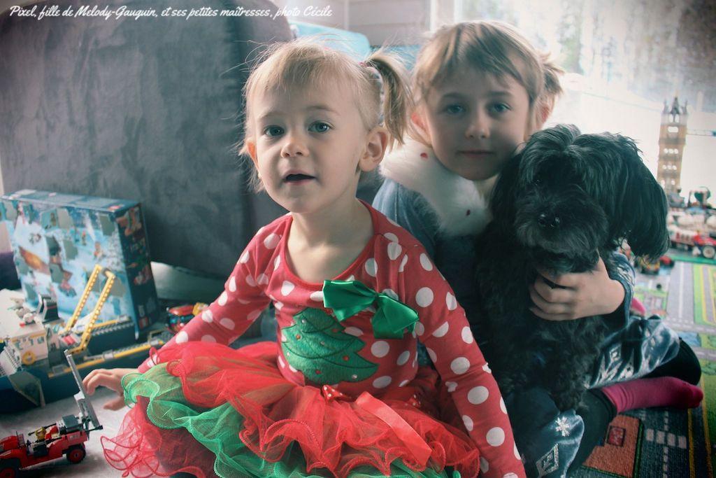 Bichon havanais et enfants