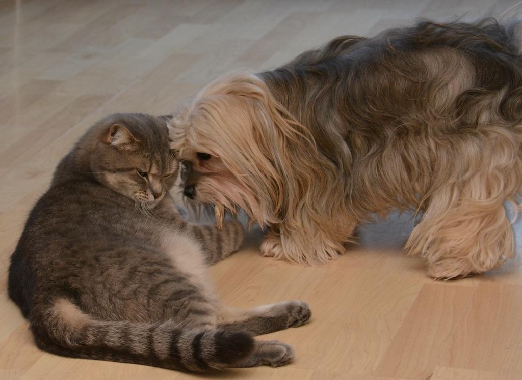 Une belle cohabitation chien chat
