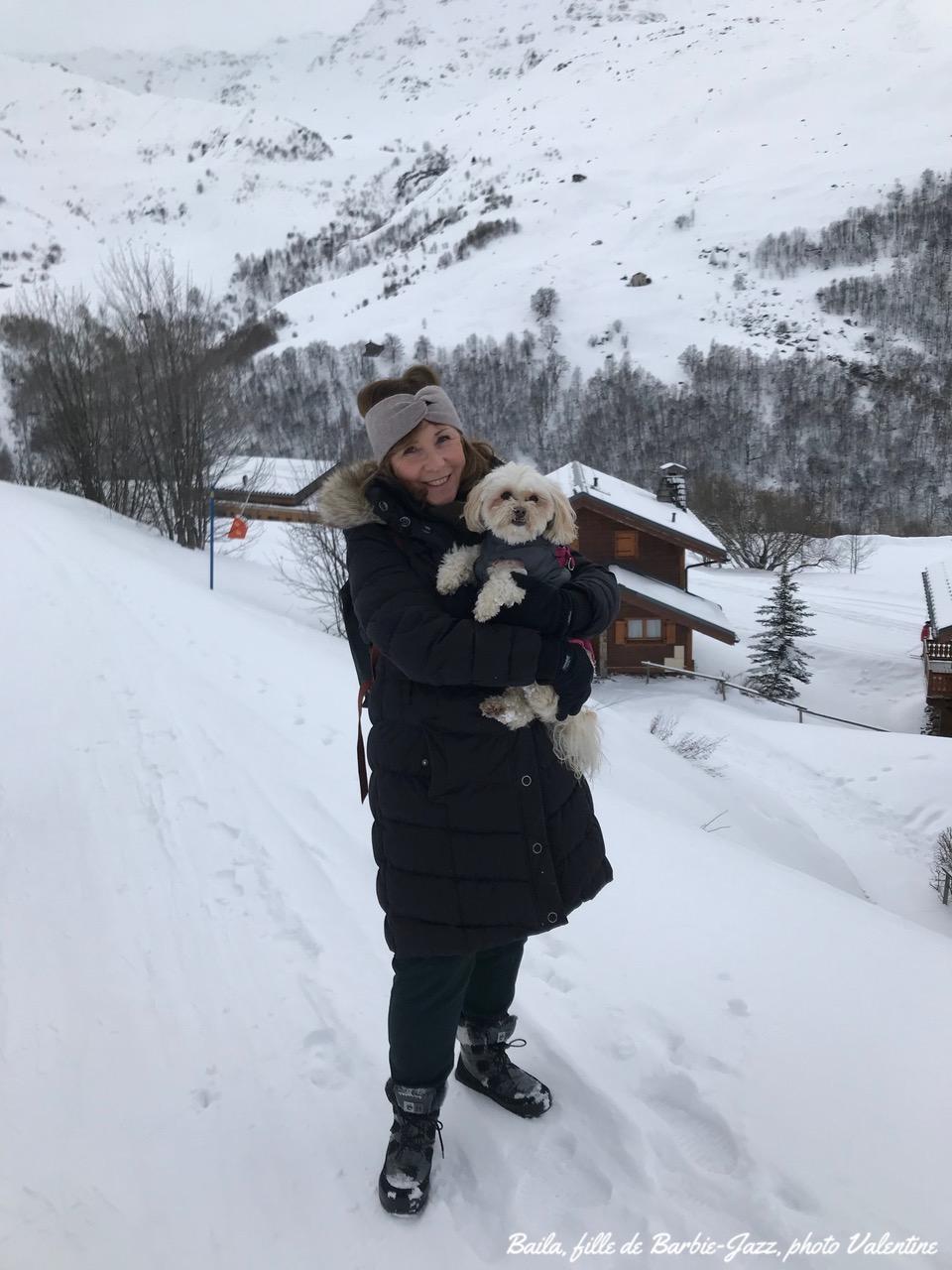 Bichon Havanais à la neige