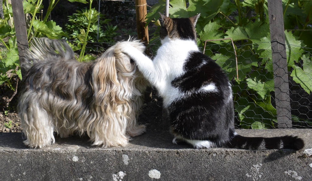 Nos compagnons canin et félin