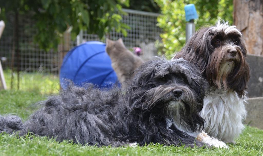 Nos compagnons canins et félins