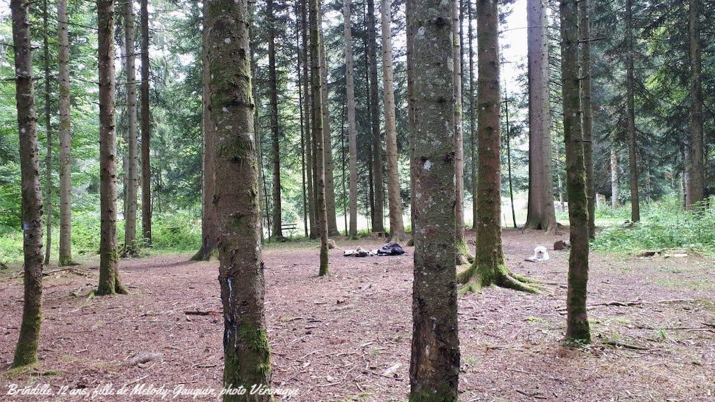 Petit chien dans forêt