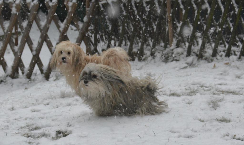 La plus belle joie hivernale