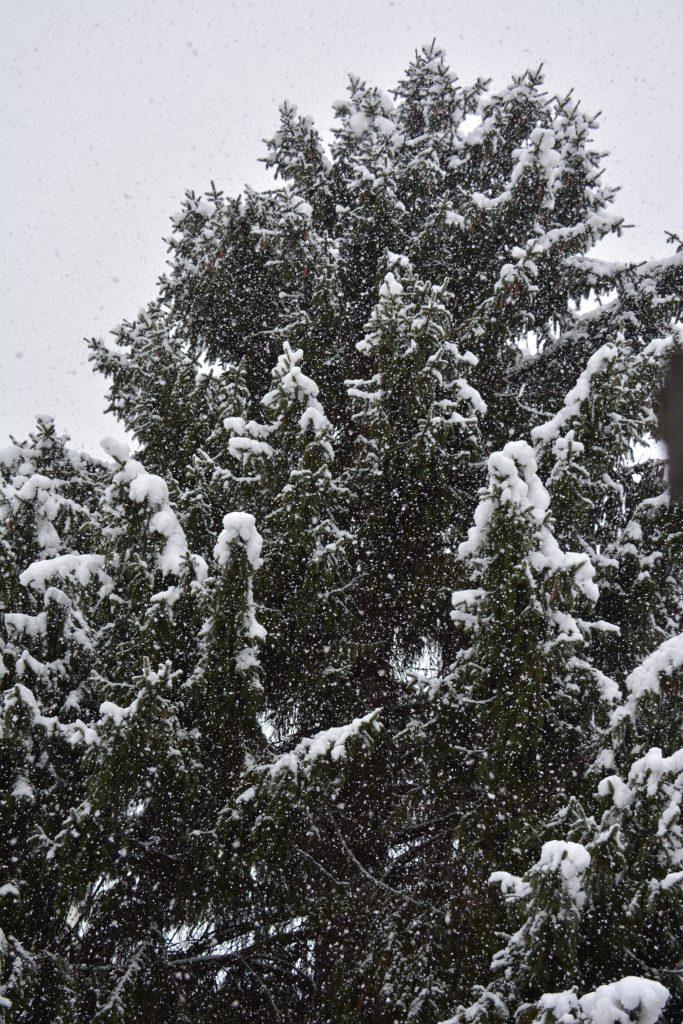 la neige à la vie est belle
